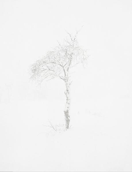 Trine Søndergaard & Nicolai Howalt, extrait de la série Tree Zone