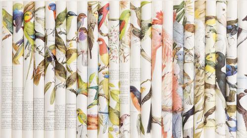 Lizzie Buckmaster, Dove Cacophony: Rip Rack Roar Rumble, paper, 80x55cm