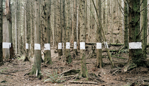 Chris Engman, Landscape for Benjamin (Trees), 2005