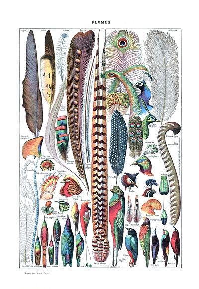 Types de plumes, Le Larousse pour tous, 1907