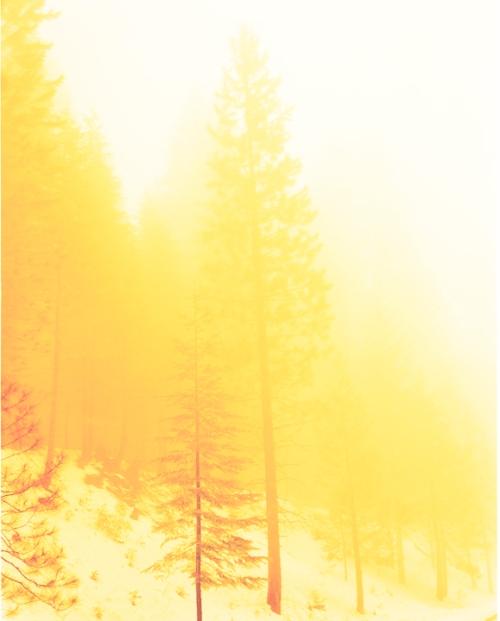 David Benjamin Sherry, Lemurian morning wood, 2008