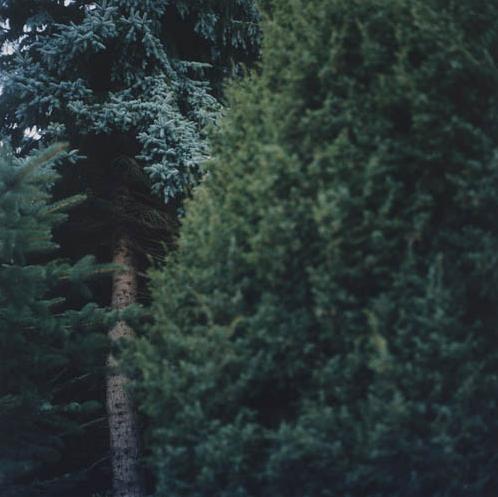 Anne Schwalbe, Ohne Titel, 2008