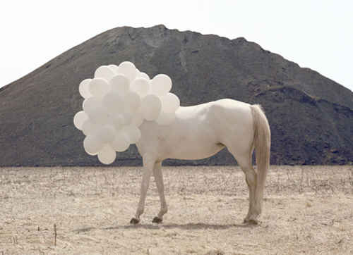 Andrea Galvani, La morte dell' imagine 7, 2005