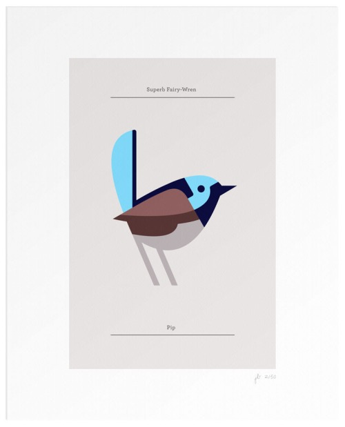 Josh Brill, Superb Fairy-Wren