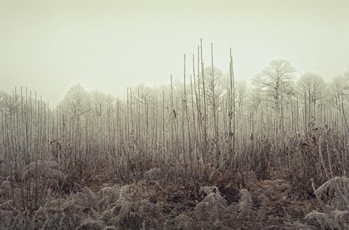 Cédric Bihr, série Christmas Frost