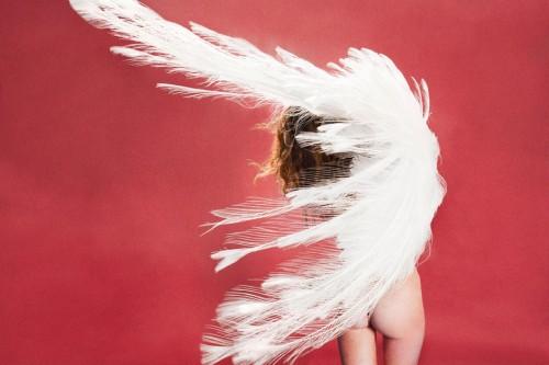 albinos peacock
